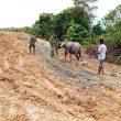 Pembangunan Jalan dirasakan Warga Pemilik Ternak Kerbau