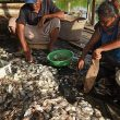 KKP: Hingga 24 November, PNBP Perikanan Tangkap Naik Rp 29,75 Miliar