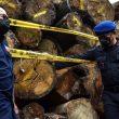Penegakan Hukum Masih Lemah, Pembalakan Kayu Hutan Makin Marak