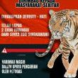 Seorang Pawang Diterkam Harimau Milik Zinka Zoo di Singkawang