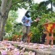 FOTO: Potret Bunga Tabebuya Bermekaran di Pontianak jadi Viral