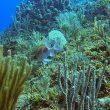 Studi Ungkap Kekayaan Kehidupan Laut di Dekat Khatulistiwa Terdampak Perubahan Iklim