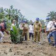 Tanam Perdana Kemitraan Memfasilitasi Pembangunan Kebun Masyarakat Antara PT BSP TBK dengan Gapoktan Sinar Lestari