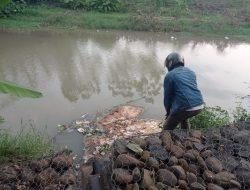 Sungai Bulanan Ini Dicemari Limbah Pemotongan Ayam